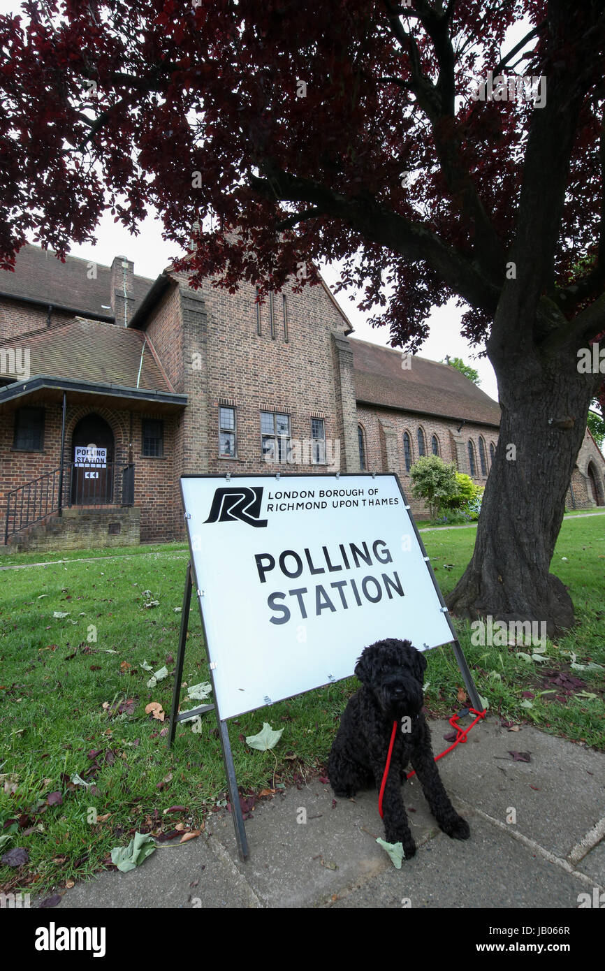 London, UK. 08th June, 2016. Dog at Polling Station, Richmond Park and North Kingston. Credit: Expo Photo/Alamy - Stock Image