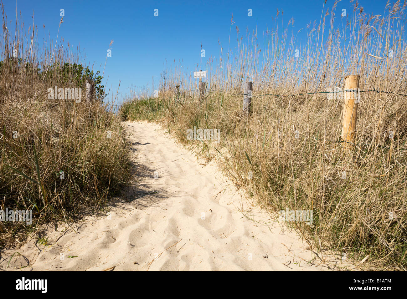 Path through the dunes, Cuxhaven, North Sea, Lower Saxony, Germany - Stock Image