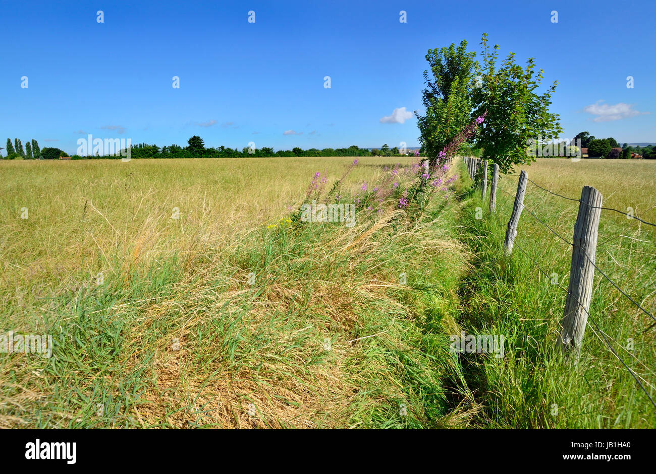 Boughton Monchelsea village, Kent, England. Fenced footpath through a field - Stock Image