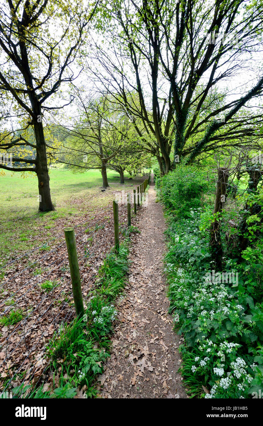 Boughton Monchelsea village, Maidstone, Kent, Public footpath through woodland - Stock Image