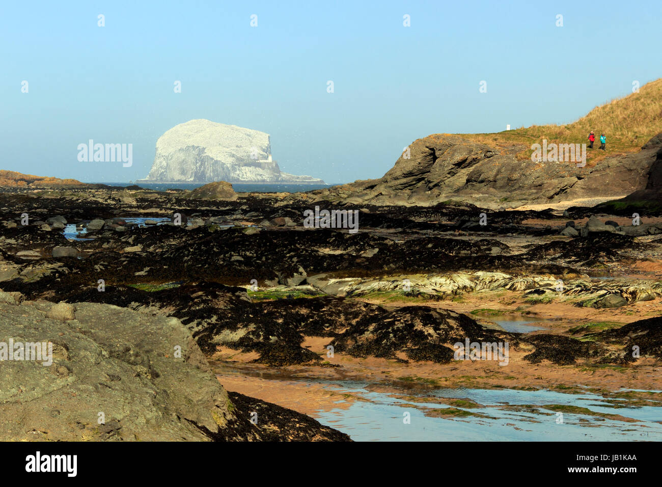 Bass Rock, taken from North Berwick, Scotland, UK Stock Photo