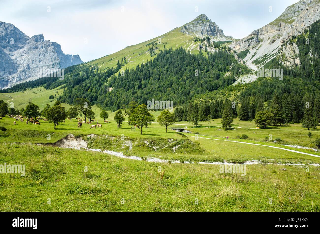 Alpenpark Karwendel - Stock Image