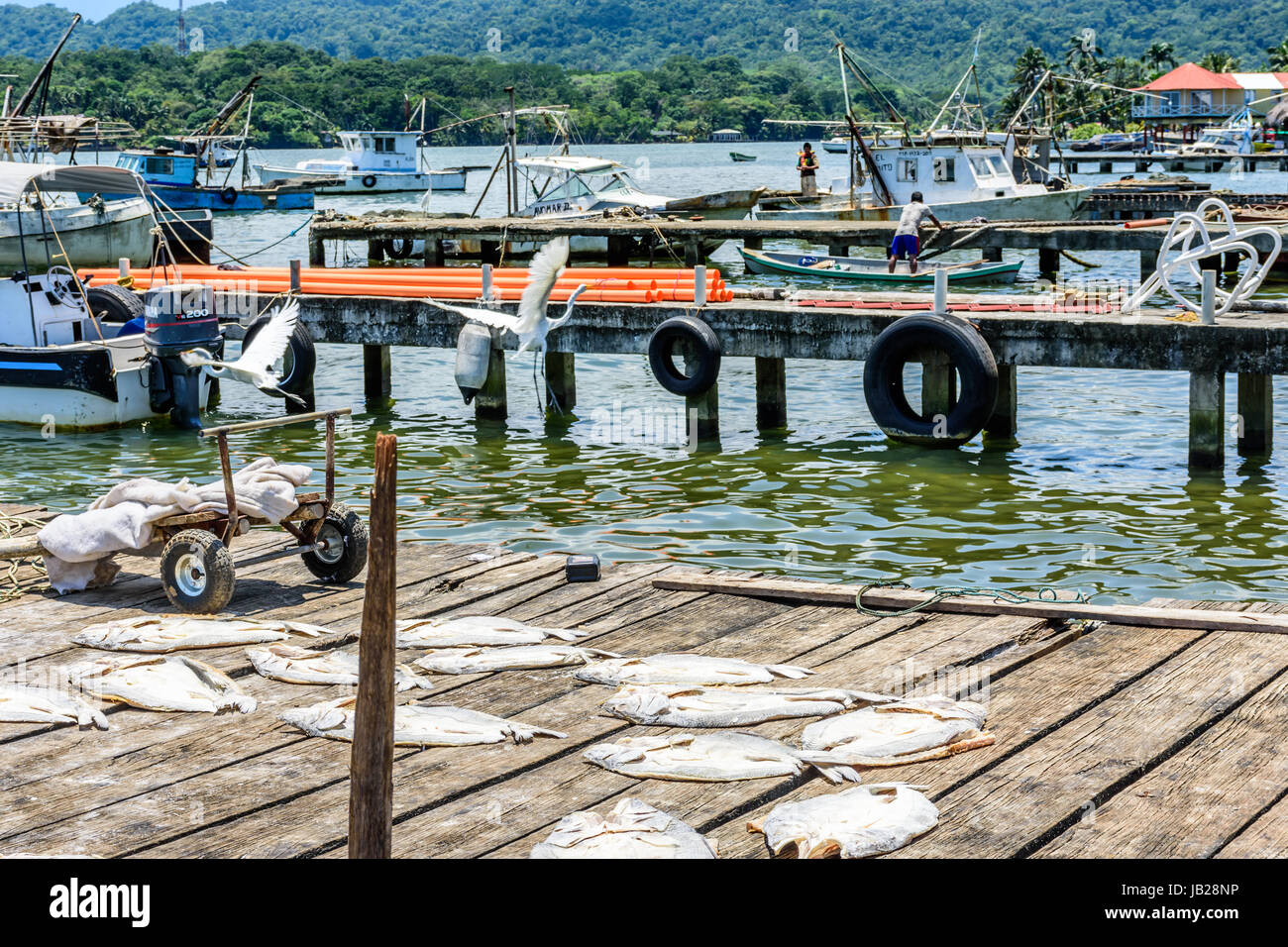 Livingston, Guatemala - August 31, 2016: Egrets fly over drying fish as fishermen work on boats in Caribbean town Stock Photo