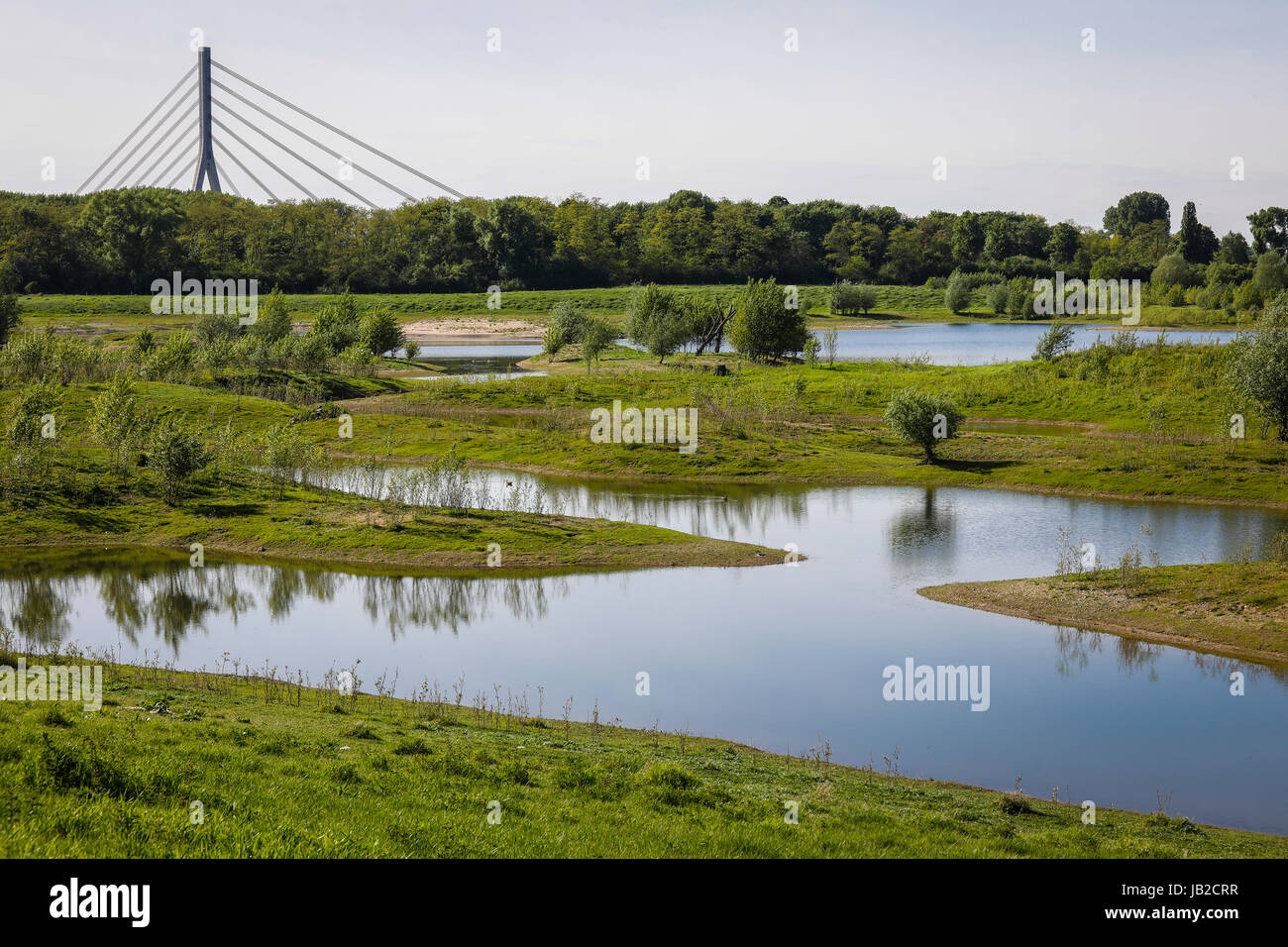 Lippe, renaturalised meadow landscape nearby the river estuary in the Rhine, Wesel, Lower Rhine, North Rhine-Westphalia, Stock Photo