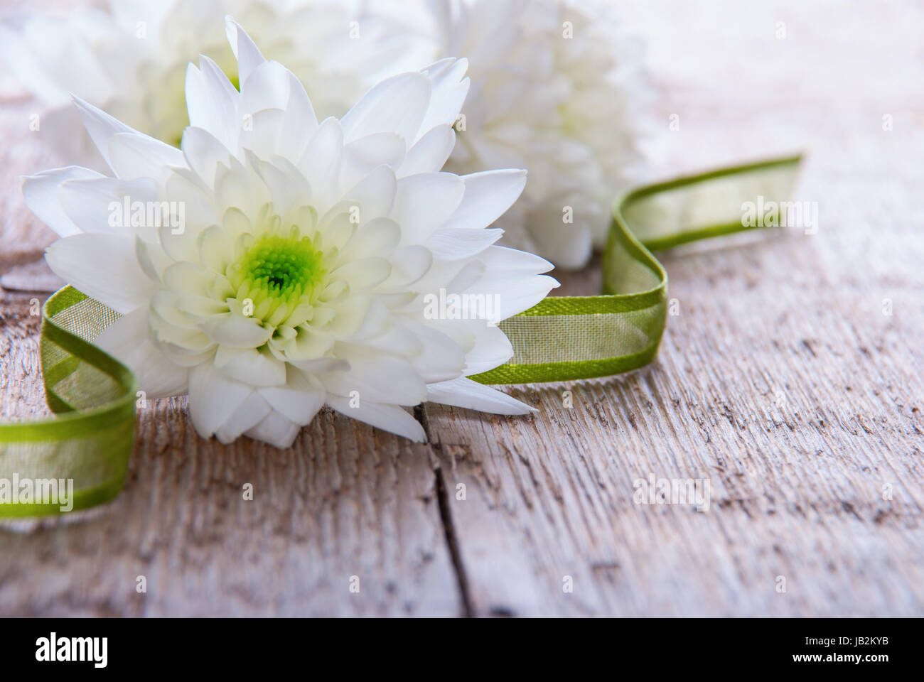A Wooden Background with White Blossoms and a Green Ribbon - Stock Image