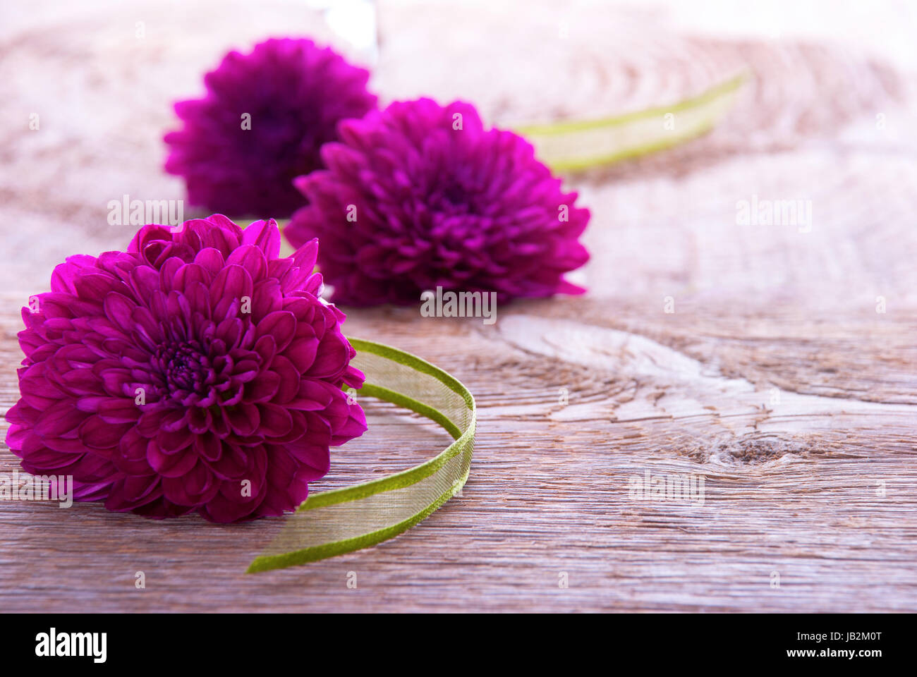 Background with Purple Blossoms and Green Ribbon on Wood with Copy Space - Stock Image