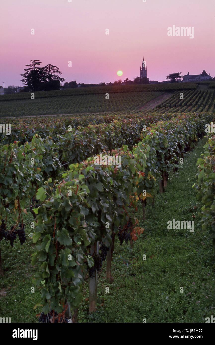 SAINT EMILION Sunset over vineyards with ripe grapes of Château Troplong Mondot church spire of St-Émilion - Stock Image