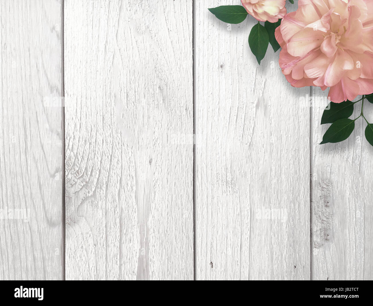 Single Pink Flower In Corner Over Whitewashed Wood Background