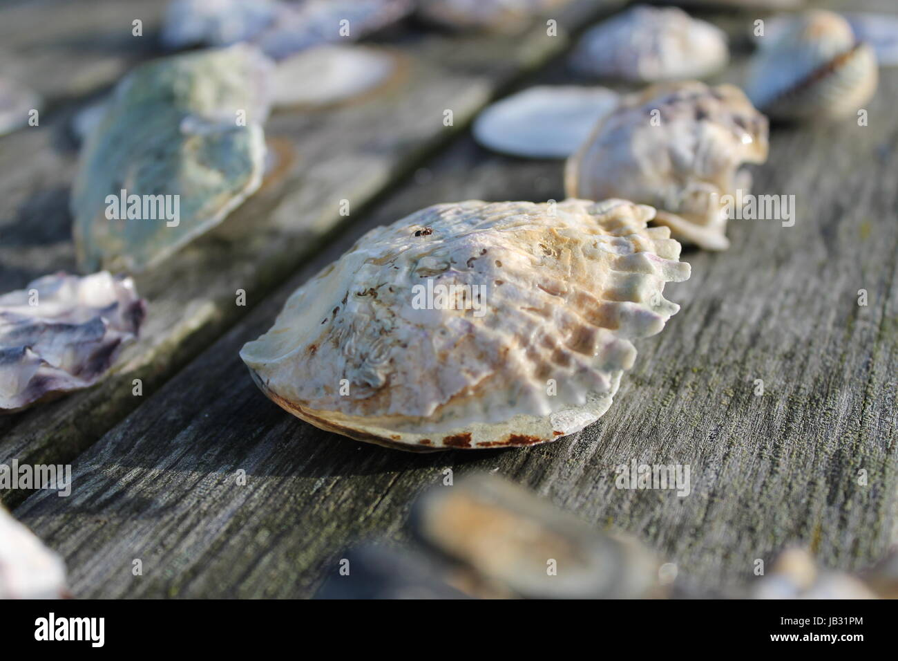 compilation shells - Stock Image