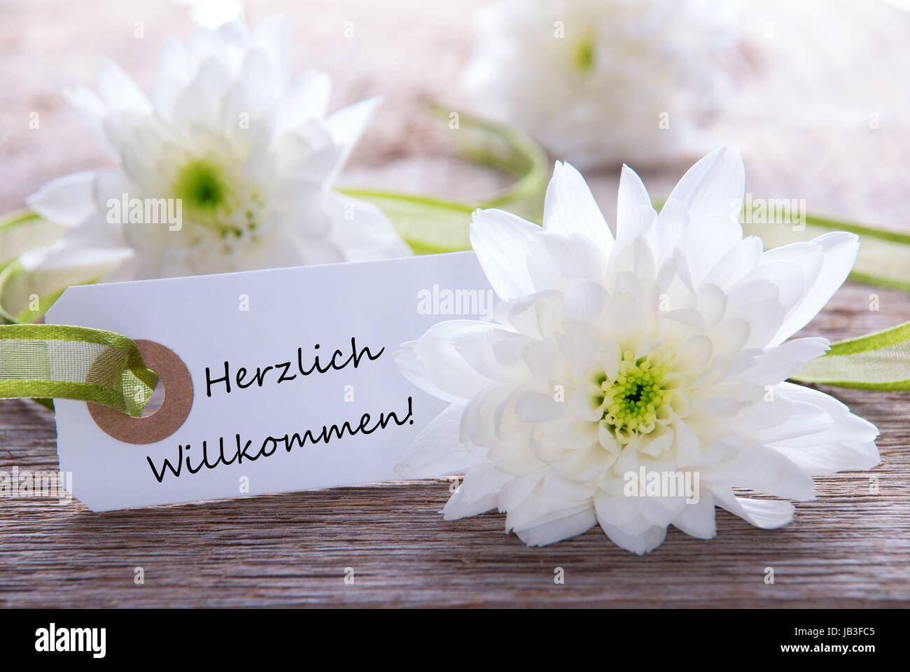 Label Welcome Purple White Flowers Stock Photos Label Welcome