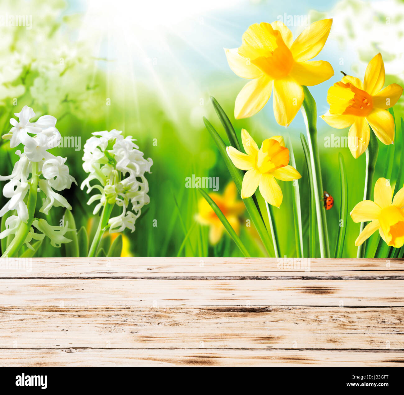 Colourful yellow spring daffodils and hyacinths with a red ladybug on the stem peeping over the top of a rustic Stock Photo