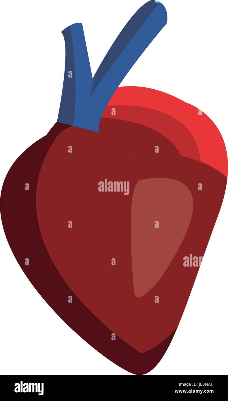 Heart Drawing Medicine Stock Photos & Heart Drawing Medicine Stock