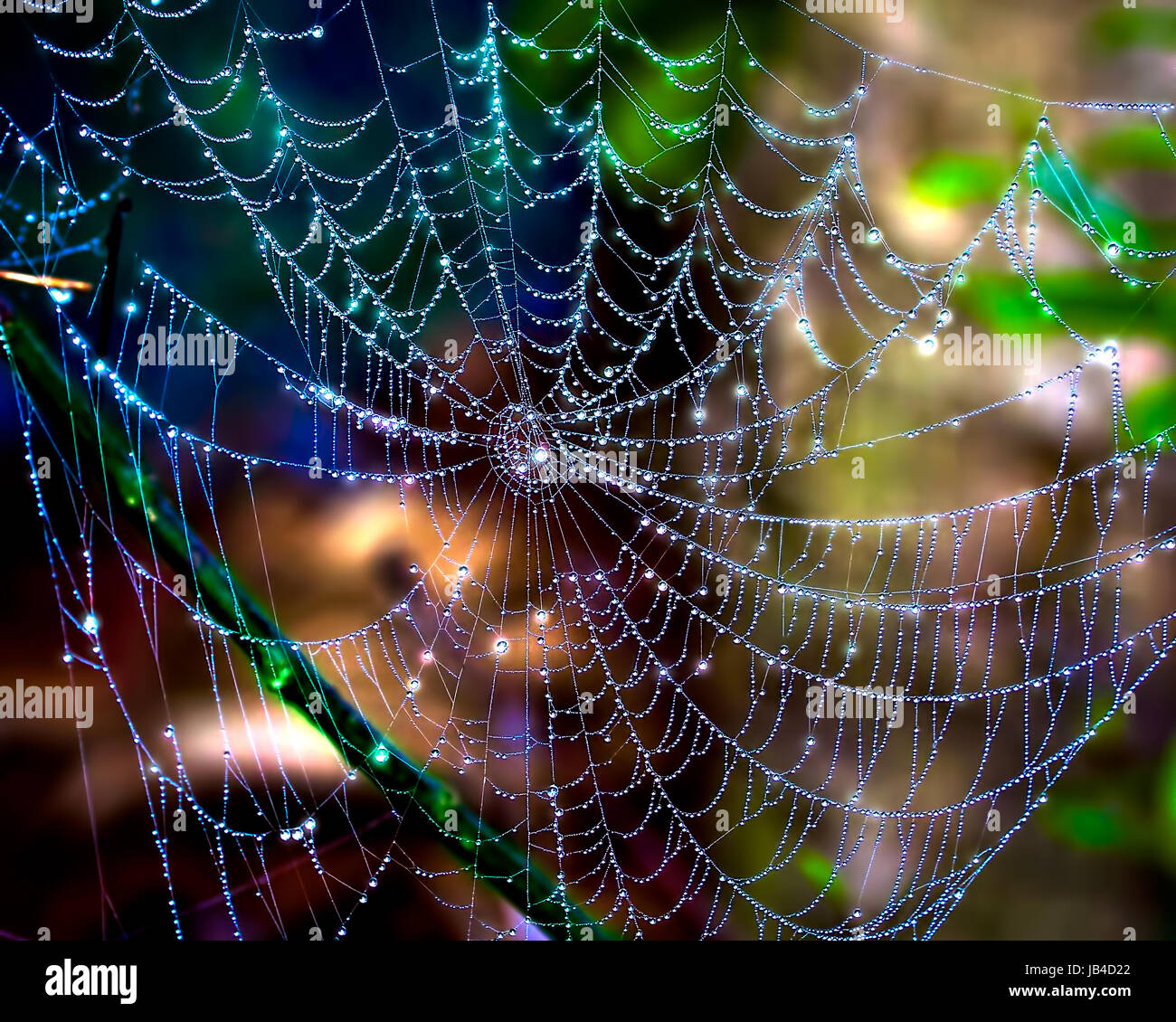 Dewdrops glisten on a beautiful and intricate spider web in the Florida Everglades. Photographed in the early morning - Stock Image