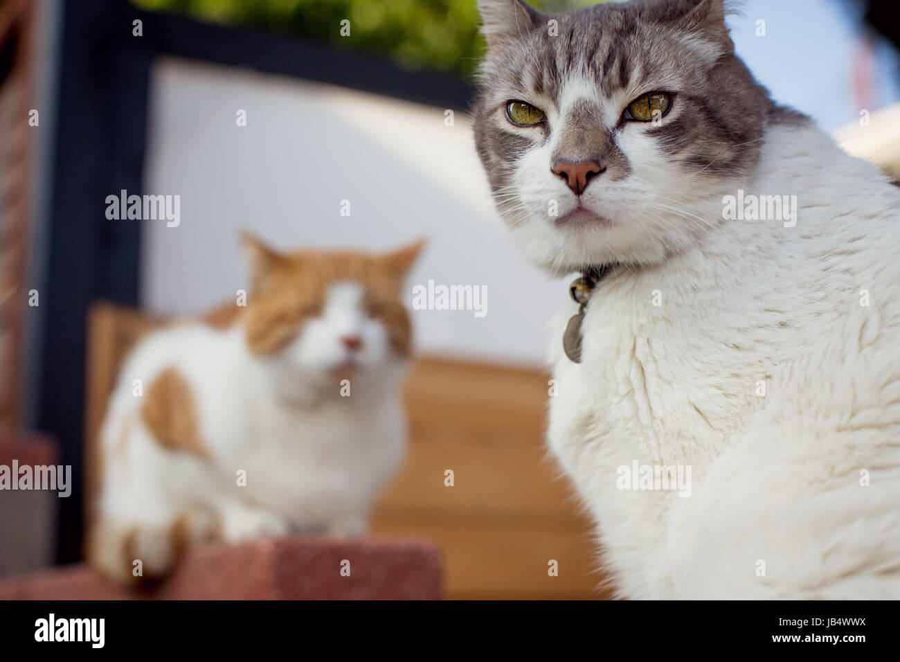 A close-up of two cats in a residential setting, one leering into ...