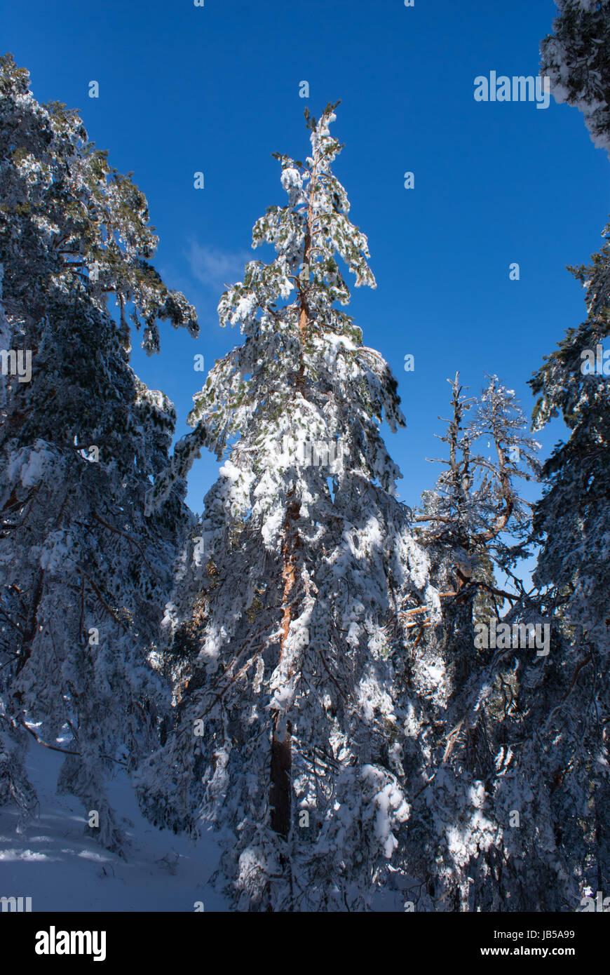 Snow in navacerrada madrid spain Stock Photo