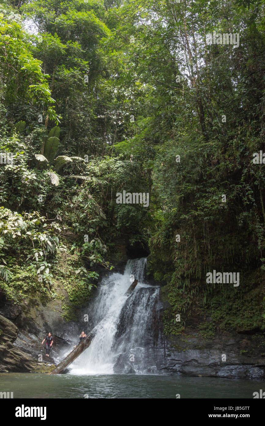 A small waterfall in a secluded part of the jungle in Ulu Temburong National Park in Brunei - Stock Image