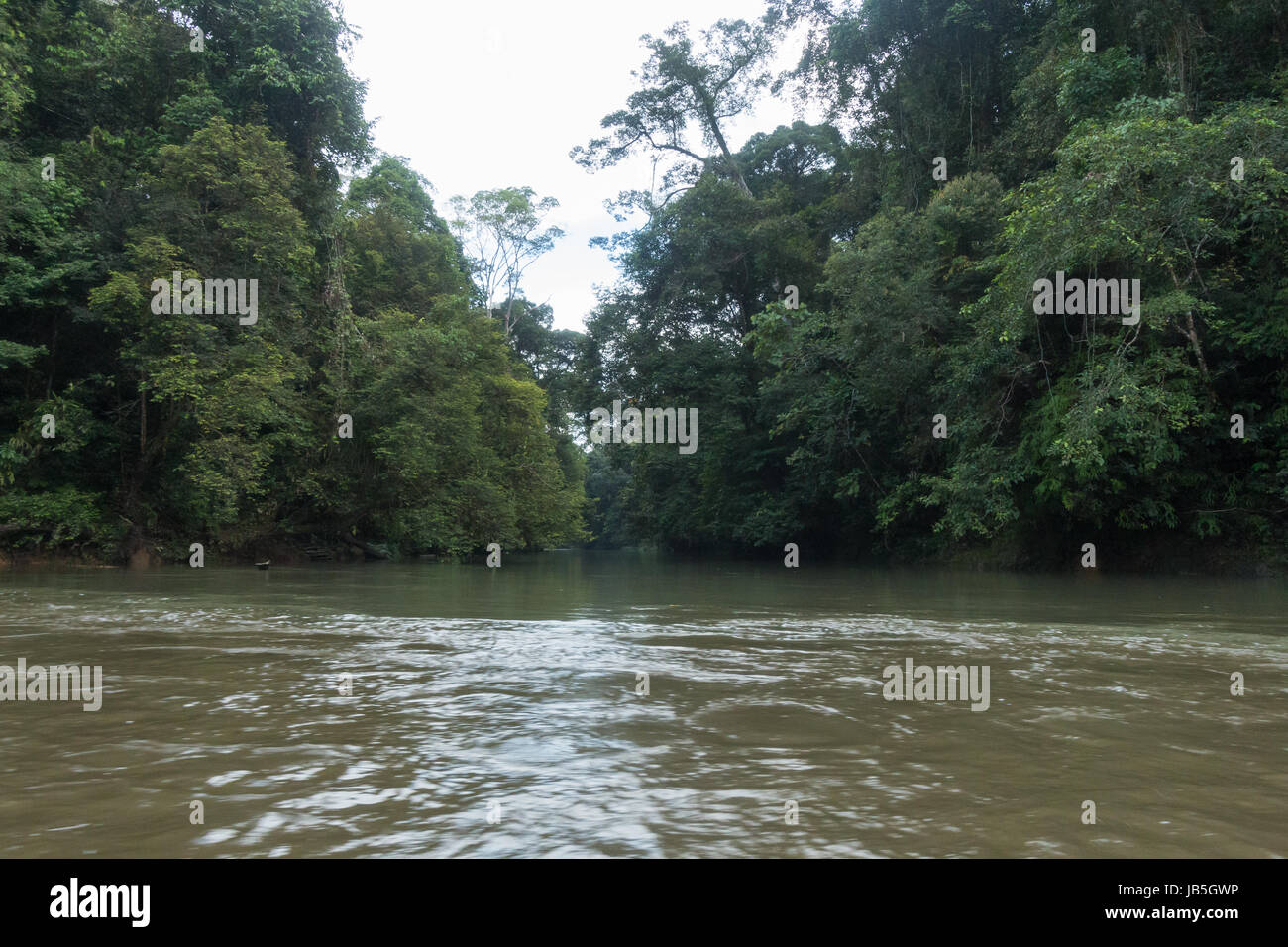 A jungle river flows through lush tropical rianforest in Ulu Temburong National Park in Brunei - Stock Image