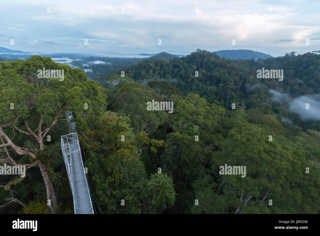 Lush tropical rianforest in Ulu Temburong National Park in Brunei - Stock Image