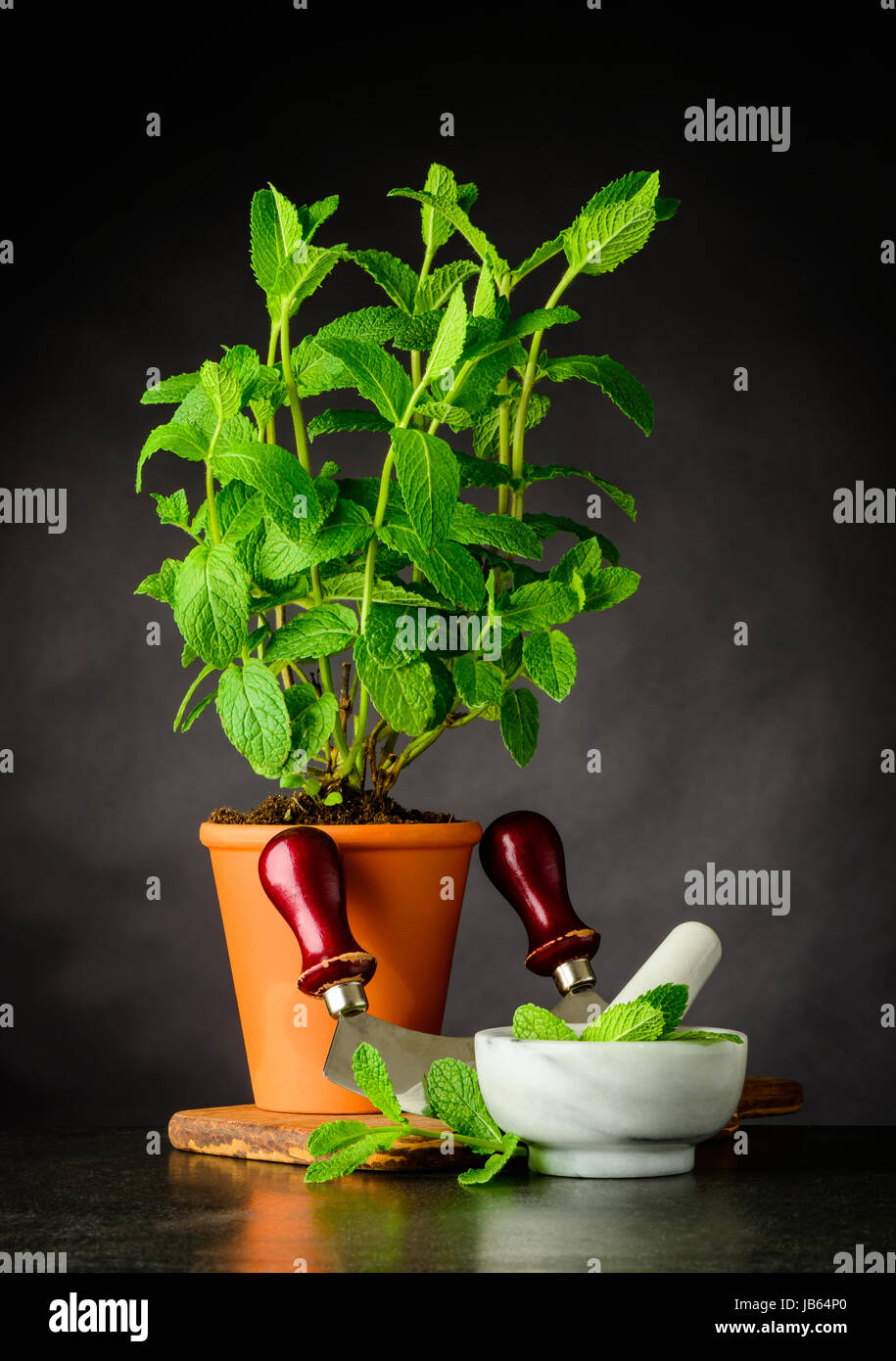Pint Plant Growing in Pottery Pot with Pestle and Mortar and Mezzaluna Herb Chopper Kitchen Utensils - Stock Image
