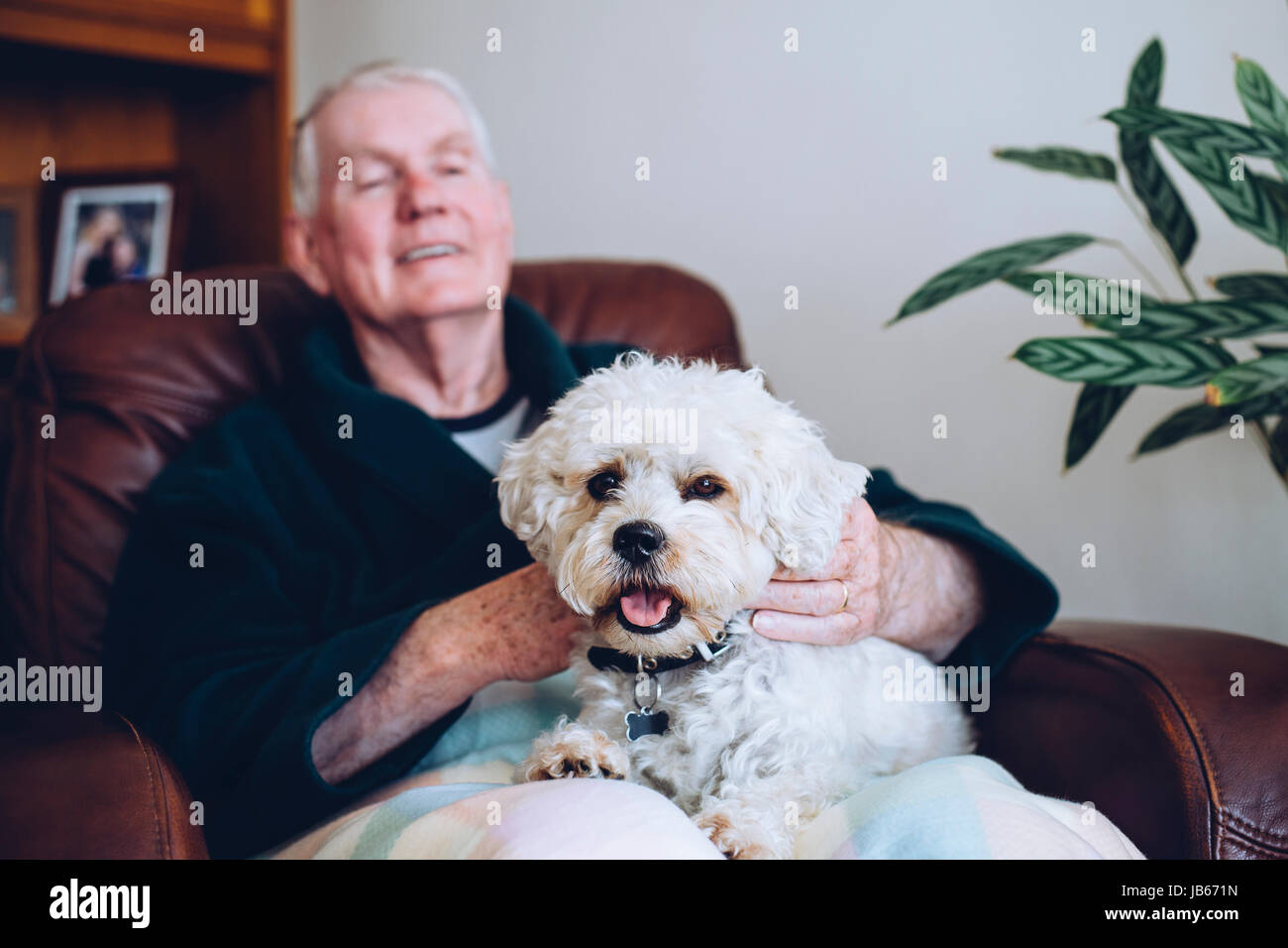Senior man sitting at home with his pet Shih Tzu dog on his knee. - Stock Image