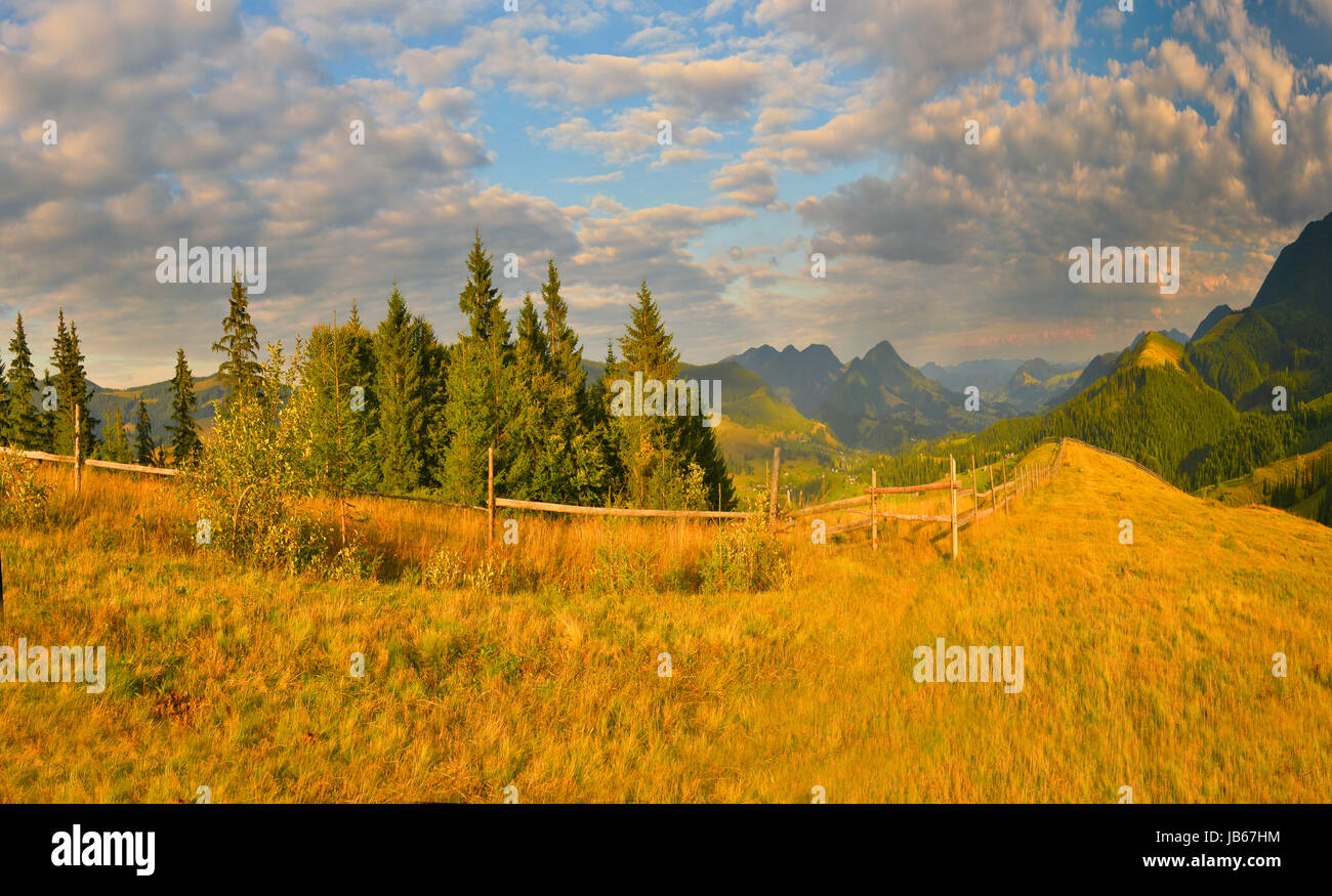 Landscape of summer mountains with conifer forest. - Stock Image