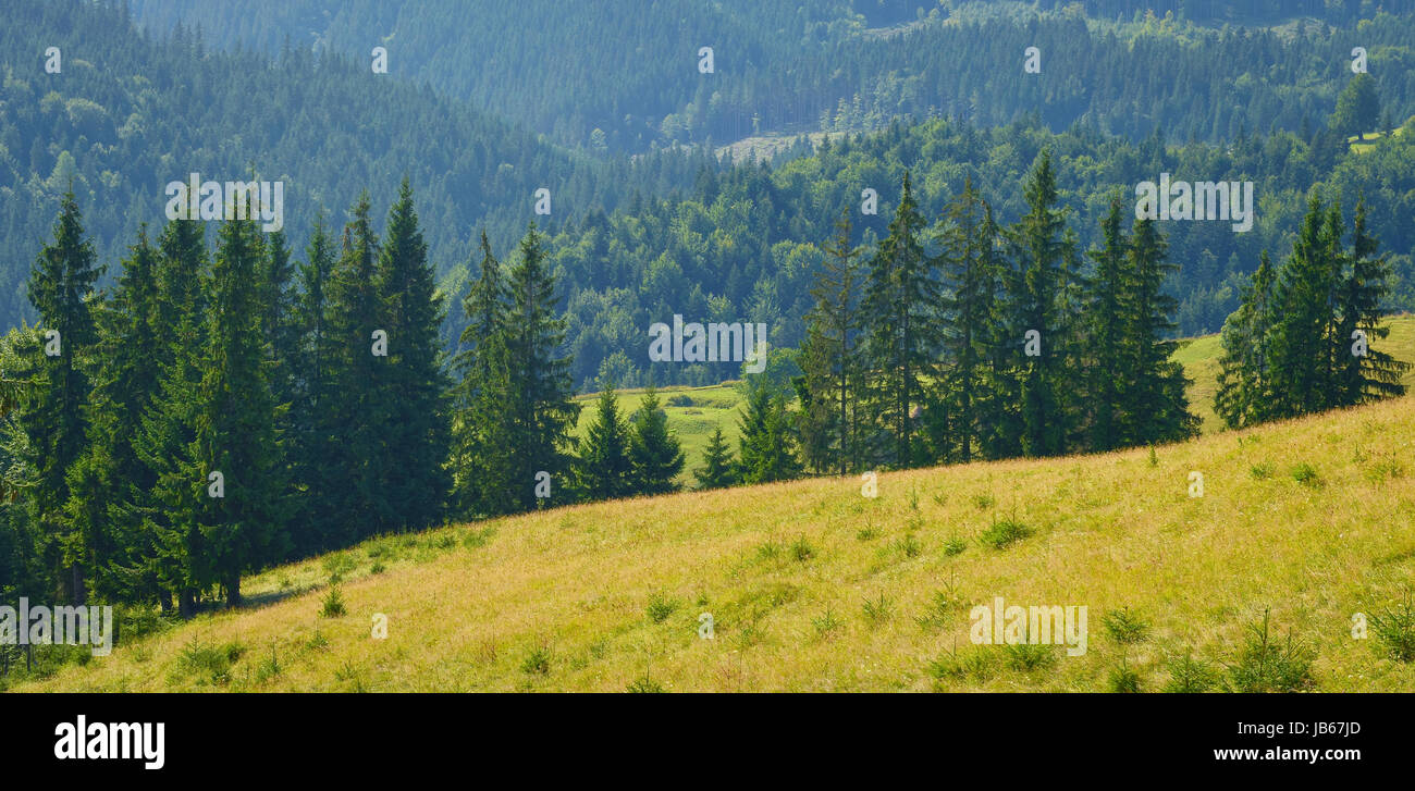 Pastures and meadows in summer mountains. Stock Photo