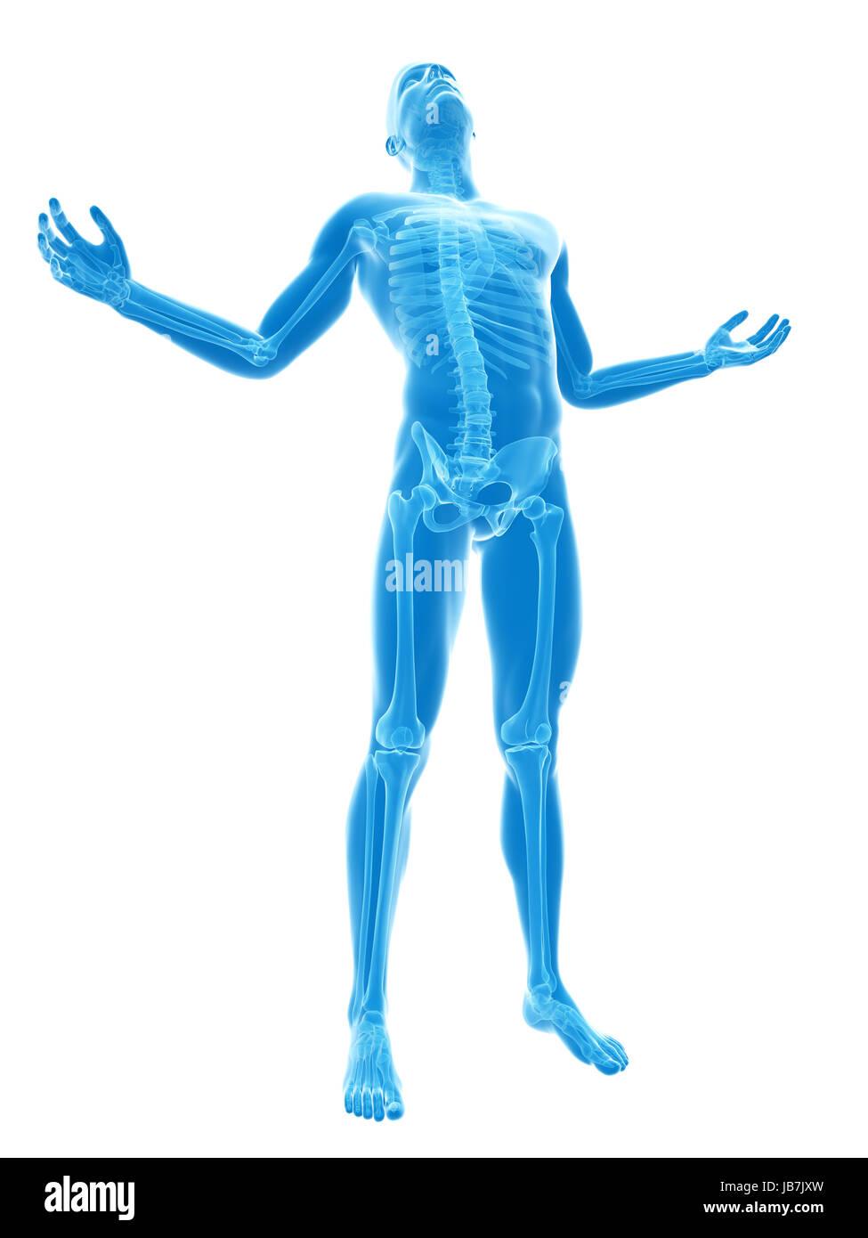 male posing - visible skeleton Stock Photo: 144612689 - Alamy