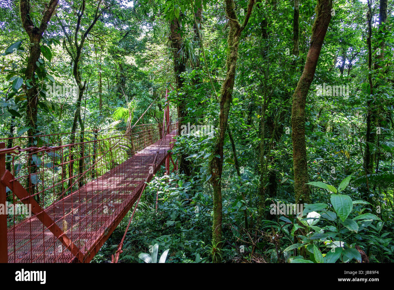 Wide angle view of red hanging bridge in the Rainforest of Monteverde - Stock Image