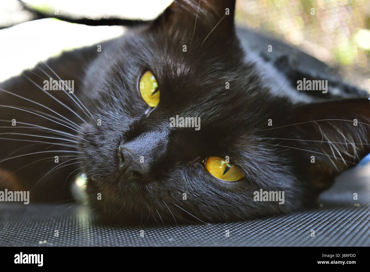 Close-up shot of domestic black cat lying on a trampoline Stock Photo