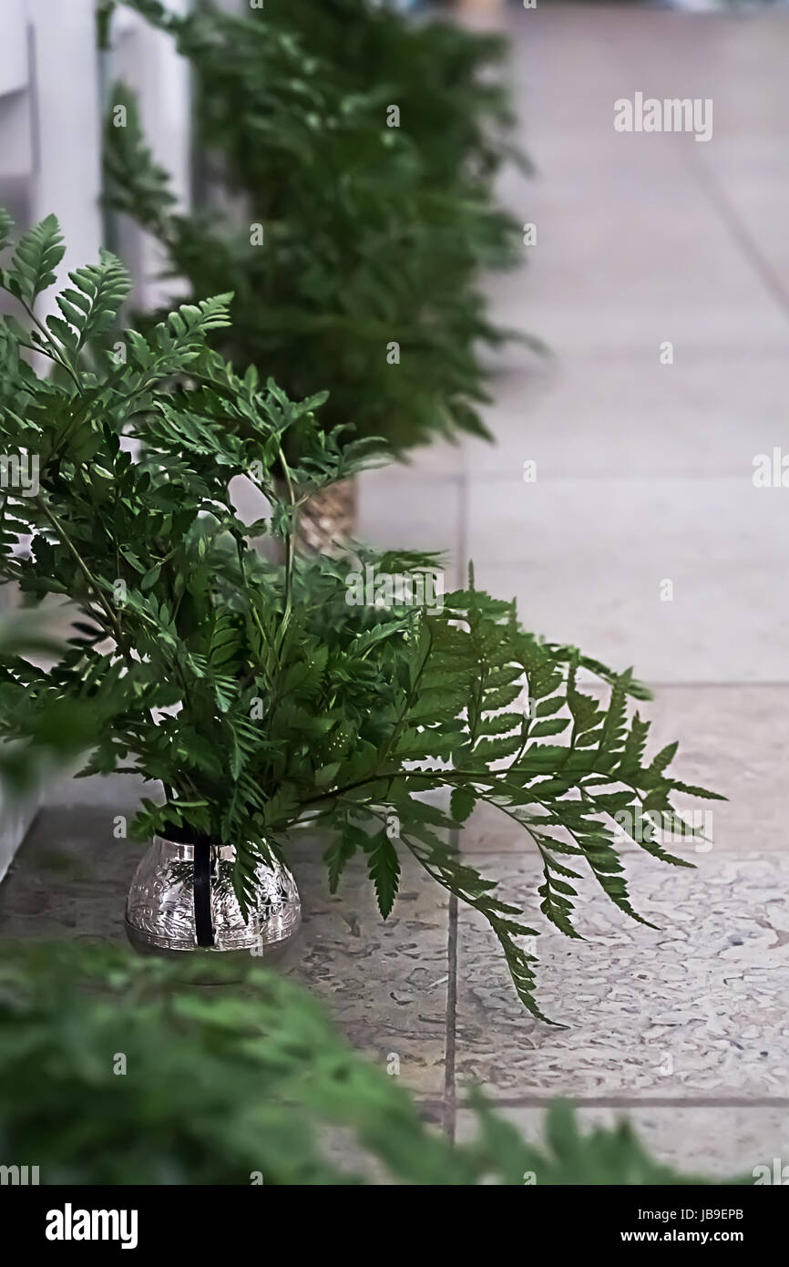 Green leaves of fern pieces of beautiful rustic wedding decoration pieces of beautiful rustic wedding decoration junglespirit Choice Image