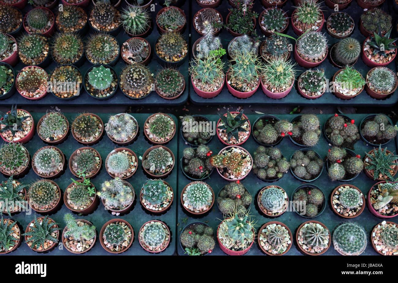Der Blumenmarkt Thewet im Zentrum der Hauptstadt Bangkok in Thailand. - Stock Image