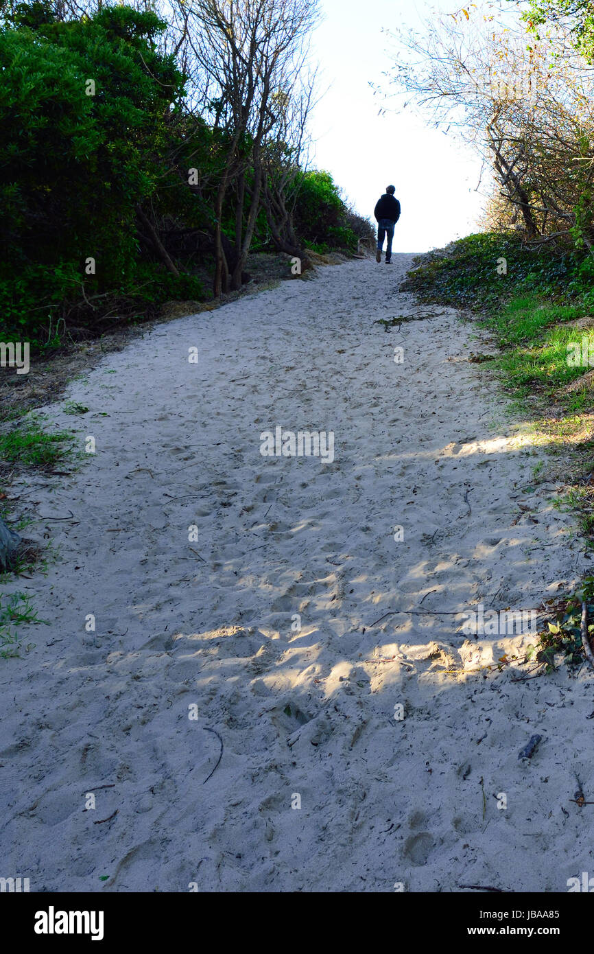 Lonely Path / person walking on a lonely beach path - Stock Image
