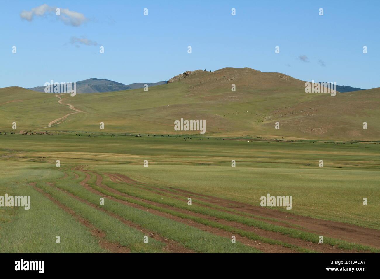 khustain national park mongolia - Stock Image