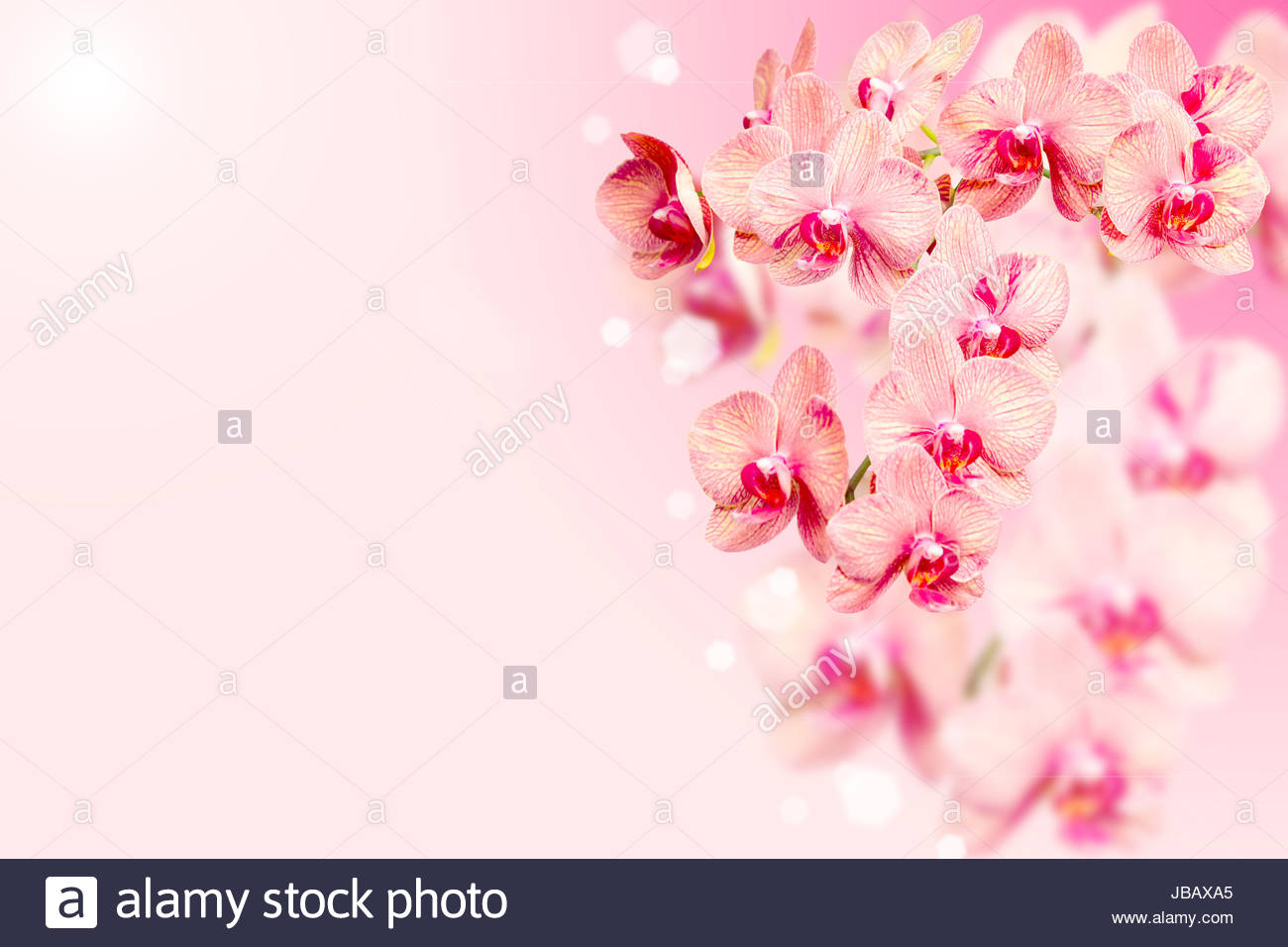 Bunch Of Orchids Flowers On Pink Blurred Background With Free Area
