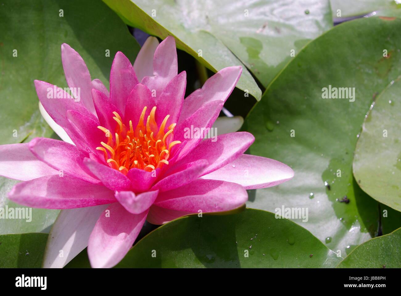 Sahasrara Chakra Stock Photos Sahasrara Chakra Stock Images Alamy