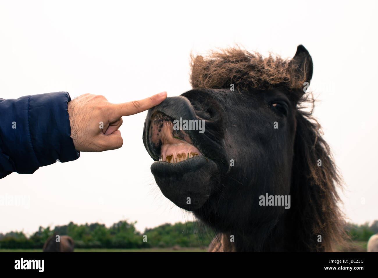 A Funny Face Of A Brown Horse Expression Stock Photo Alamy