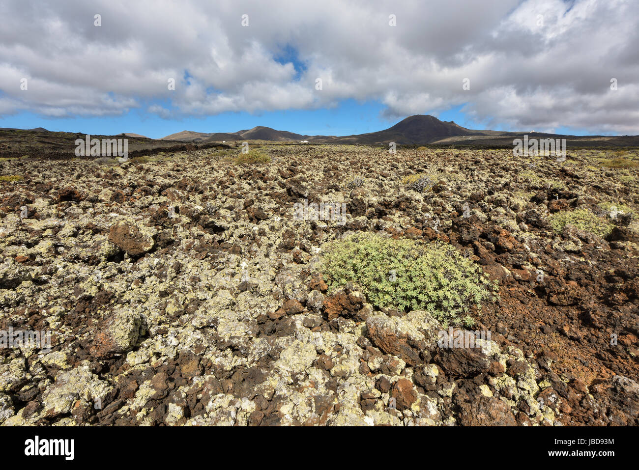 Fascinating volcanic landscape in Lanzarote near Jameos del Agua cave. Canary Islands, Spain - Stock Image