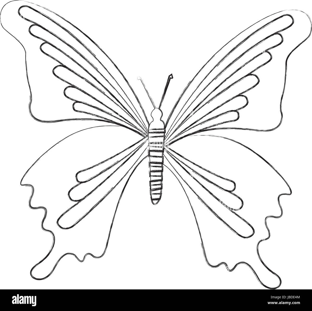 Sketch Draw Butterfly Cartoon Stock Vector Art Illustration