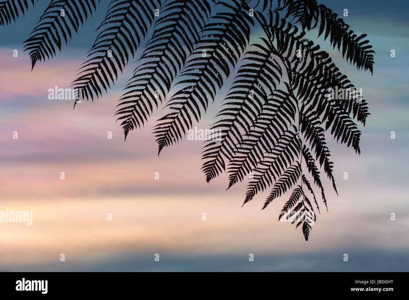 BALI, INDONESIA ASIA - Silhouette of a Fern leaf against a colourful iridescent sky or mother of pearl, at sunset. Stock Photo