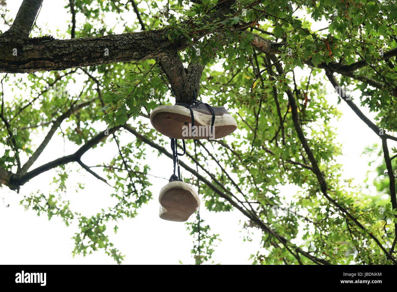 canvas shoes hanging from tree branch - Stock Image