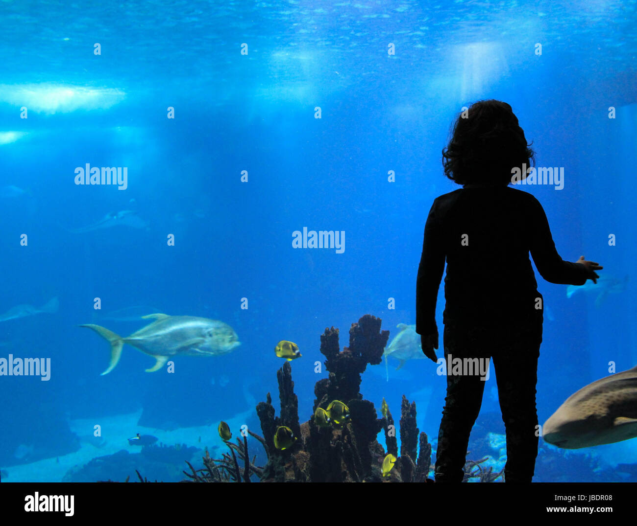 Fish in oceanarium in Lisbon Portugal - Stock Image