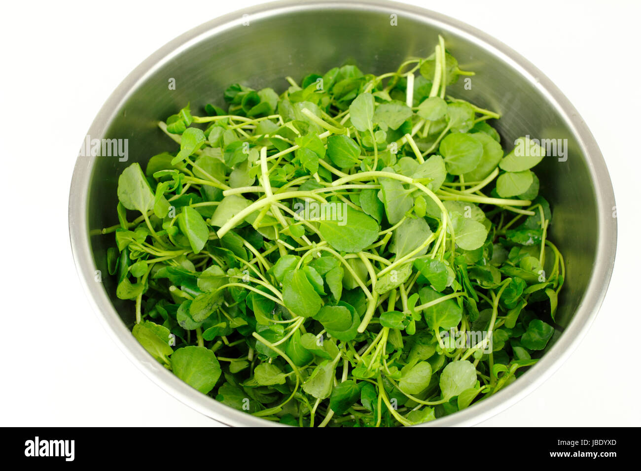 Close up of stainless steel bowl on white with small green watercress leaf vegetables used in salads and as a garnish - Stock Image