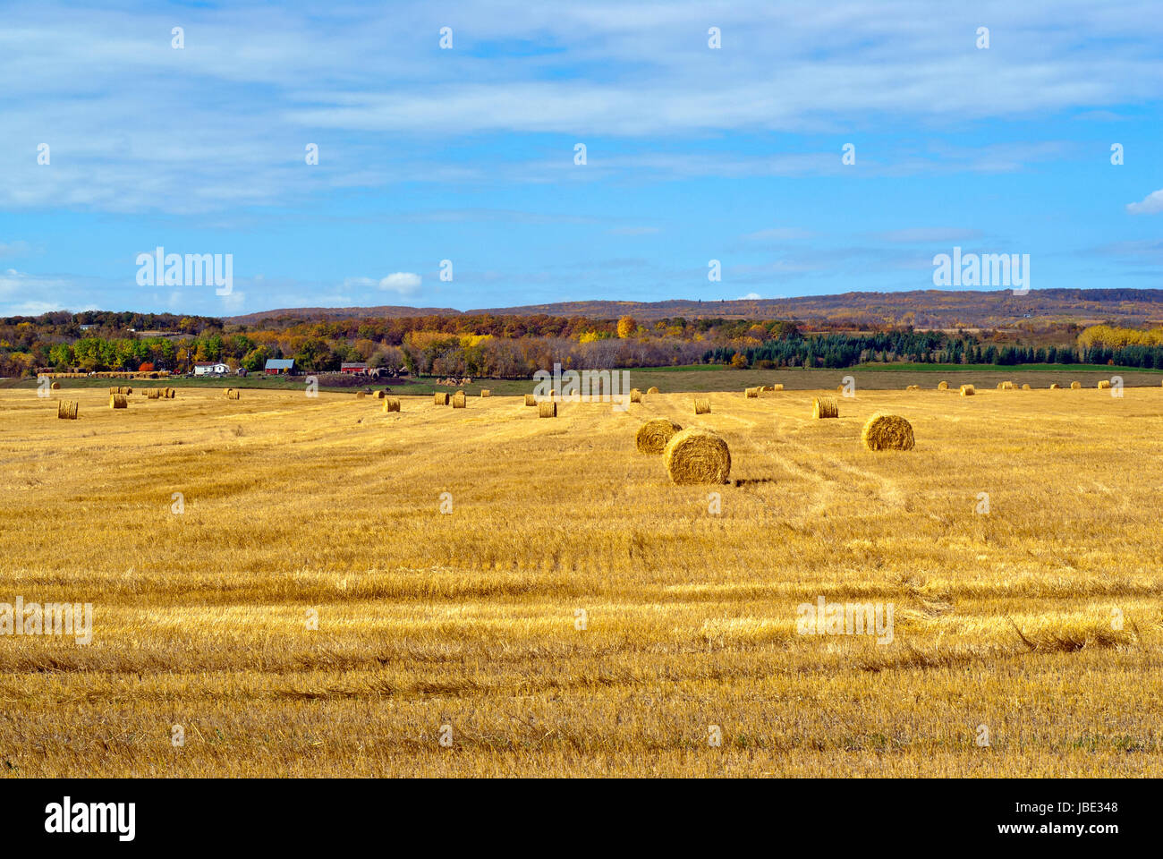 Harvested wheat field with round straw bales, Manitoba, Canada - Stock Image
