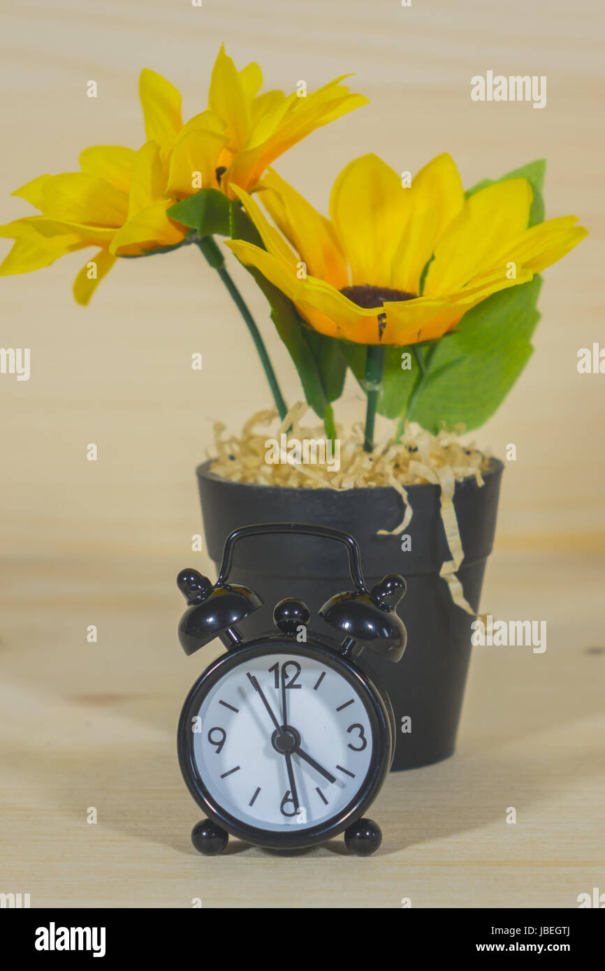 Sunflower in a Flowerpot and Alarm Clock On a wooden background - Stock Image