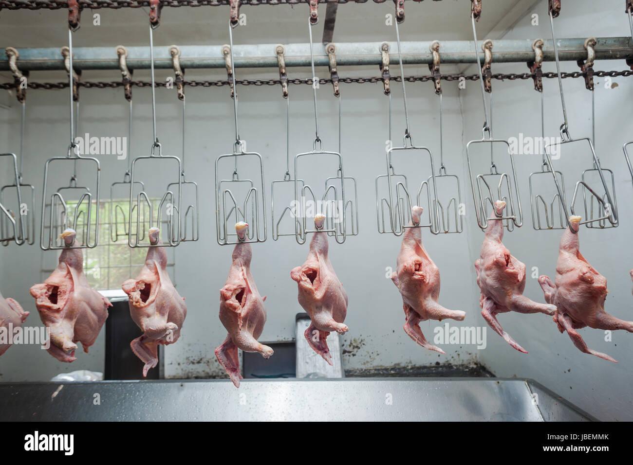 hens food - Stock Image