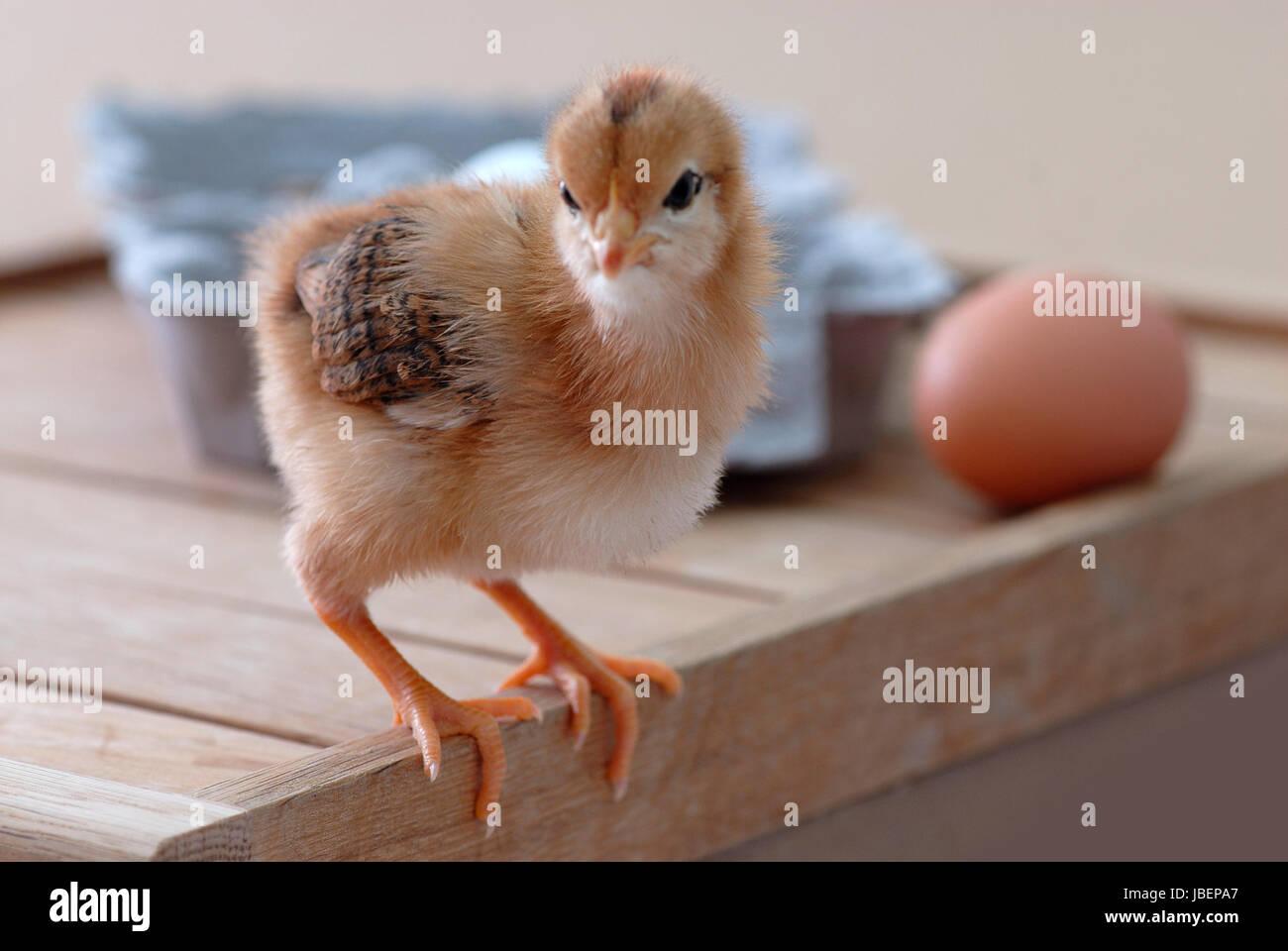 Pusteblume [#Beginning of Shooting Data Section] Nikon D200 2014/03/15 14:31:22.49 Zeitzone/Datum: RAW (12 Bit) - Stock Image