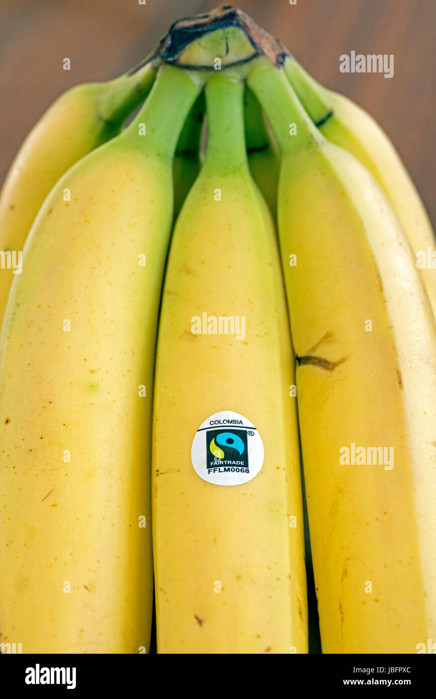Bunch of Fairtrade or Fair Trade bananas with logo from Colombia - Stock Image