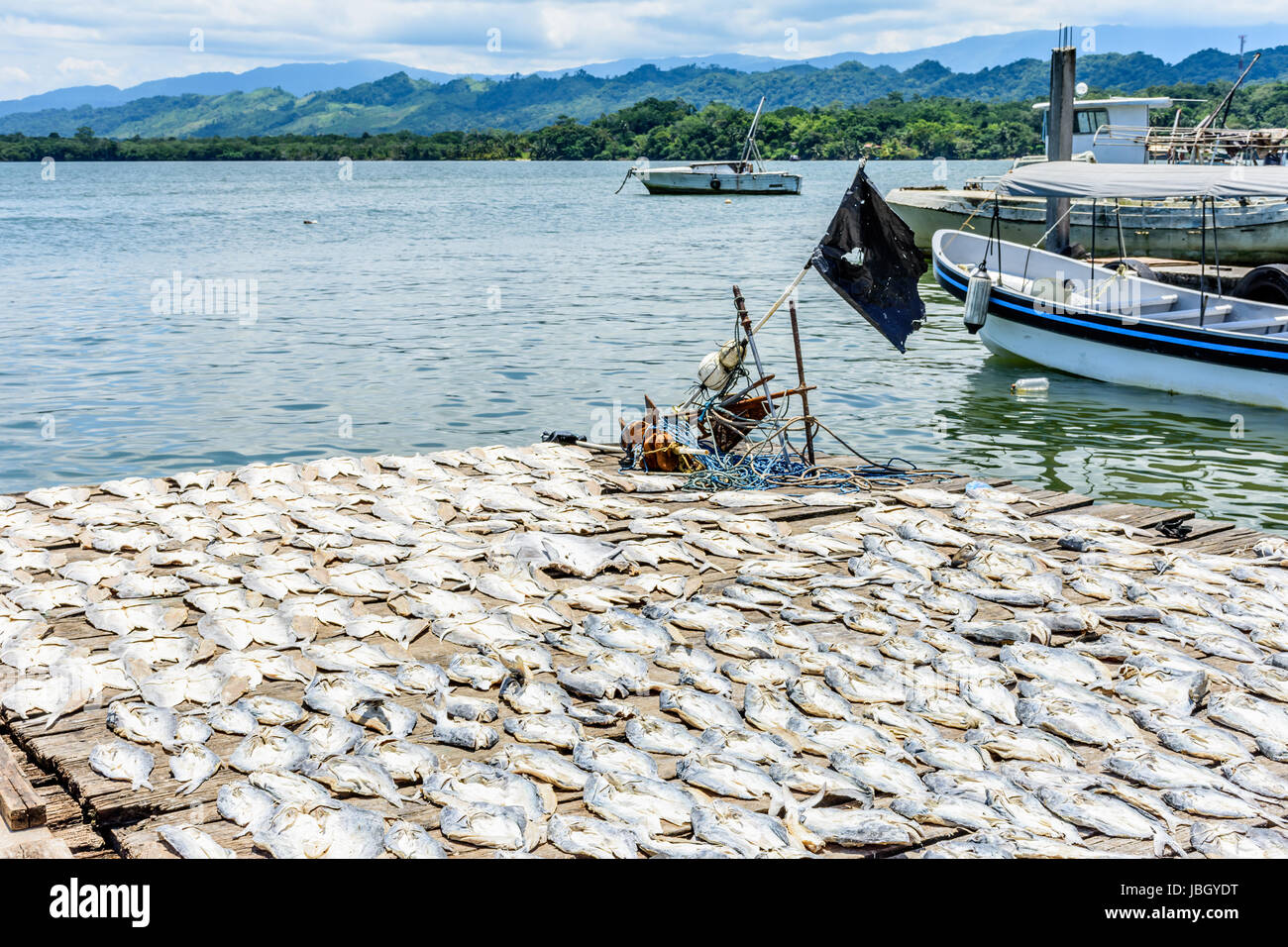 Fishing boats at anchor near fish drying in sun by river estuary of Rio Dulce in Caribbean town of Livingston, Guatemala - Stock Image