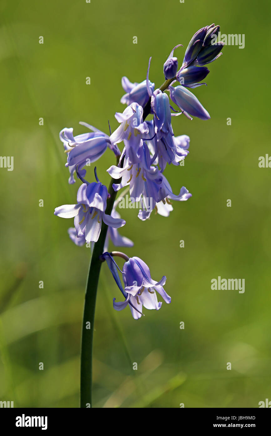 plant conservation of nature Stock Photo
