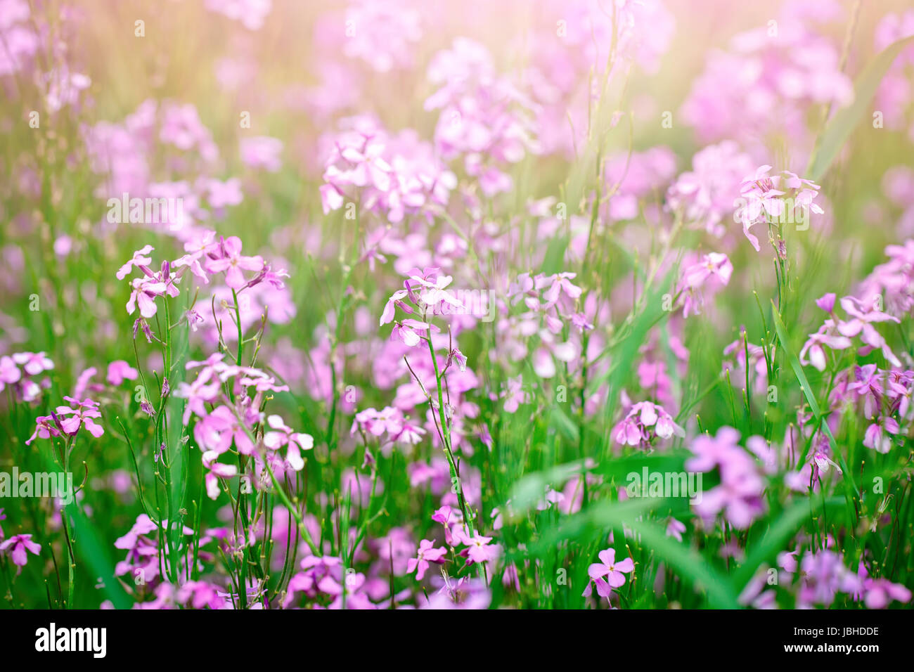 Beautiful wild flowers in the green grass year field stock photo beautiful wild flowers in the green grass year field izmirmasajfo
